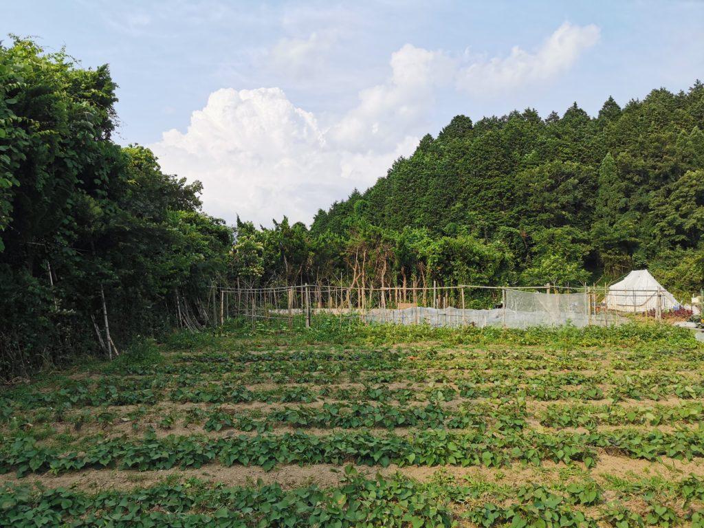 『安穏農園』という名の通り、『農園』なんです!